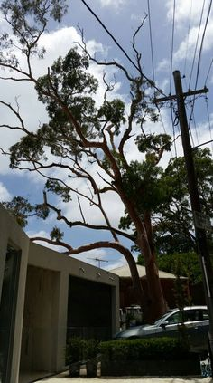 Professional tree trimming and pruning Elderslie helps maintain the health and appearance of the trees and its best to get proven experts like the ones at Alex Tree Services to handle the job for you.