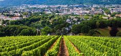 vineyards in Trier in Germany's Mosel Valley