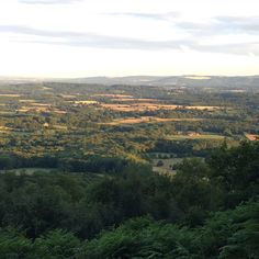 Black Down, Surrey. Have just enjoyed a wonderful stomp around this area this evening. So luck to have this amazing countryside on my doorstep