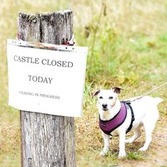 """30 July (Monday): LLansteffan Castle closed for filming: @cauliflowerescue instagram  """"When #DameJudiDench and @eddieizzard mess up your walkies plans ❤️. We are excited to watch #sixminutestomidnight and see our lovely #westwales 😍☀️🎬 #rescuedogsofinstagram #filmlocation #judidench James D'arcy, 30 July, Finishing School, Close Today, Judi Dench, Filming Locations, Thriller, Castle, Place Card Holders"""