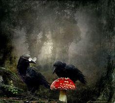 Die Mykologen - Glückspilze - Lucky Fellows - Fungi Experts  //  By h.koppdelaney at flickr