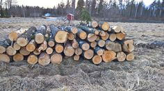 Puut pinottu