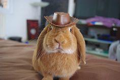 bunny cowboy  #animals #bunny #funny #cute