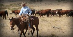 Montana Bunkhouses, Working Ranch Vacations in Montana & Wyoming…