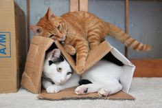 Why is it when one cat wants to sleep in a box, another cat just have to ruin it?