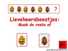 Digibordles Lieveheersbeestjes. Maak de reeks af. Spel voor kinderen van groep 1 en 2. http://digibordonderbouw.nl/index.php/themas/dieren/lieveheersbeestjes
