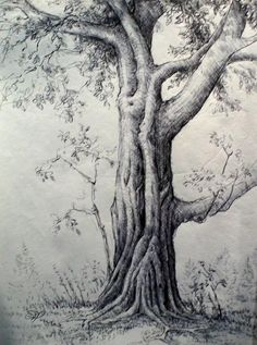 Drawings of Trees Sketches - Bing Images