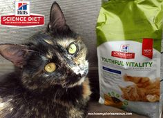 Have you ever experienced the joy of adopting a senior pet? Today I'm sharing my experiences and how Hill's Pet Nutrition is transforming lives through their Youthful Vitality food and Mission Adoptable webisodes! #ad #HillsTransformingLives http://www.mochasmysteriesmeows.com/2017/11/senior-pets-make-life-golden.html