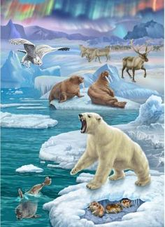 NEW Diamond Embroidery full canvas painting diy diamond painting diamondGlacier landscape animal polar bear Polar Animals, Polar Bear, Baby Animals, Cute Animals, Animal Habitats, Bear Art, Animal Projects, Wildlife Art, Wild Life