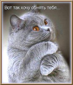 "Photo from album ""Коты"" on Yandex. Animals And Pets, Baby Animals, Funny Animals, Cute Animals, Funny Cats And Dogs, Cats And Kittens, I Love Cats, Cute Cats, Kitten Cartoon"