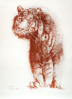 Tiger (Sanguine Conte a Paris) 50x70cm