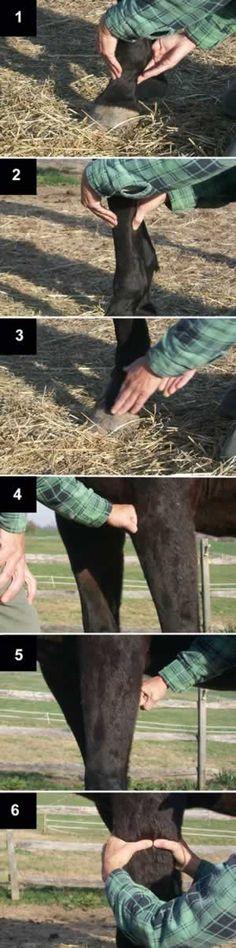 Bodywork: Grounding the Horse Before You Start