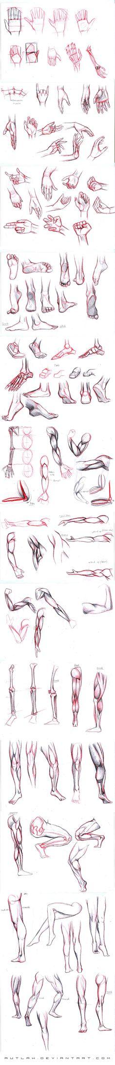 Manos y brazos