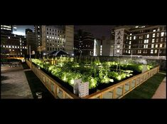 Sowing seeds in the city | Urban Farming (just in case you're getting the wrong idea)
