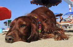 Spiagge pet friendly: la top ten - VanityFair.it