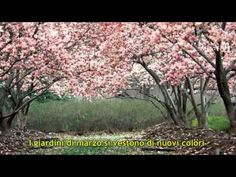 I giardini di marzo - Lucio Battisti (video con testo) - YouTube