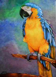 Colorfull Parrots Watercolor, pastell and pen gel white, 30X45 Jessica Ramella 2012 #parrot #feather #watercolor #pastell #colorfull #draw