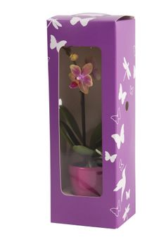 Packaging mini orchid #phalaenopsis