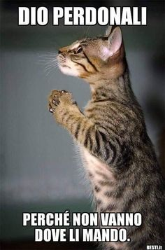 Funny pictures of dogs and cats kittens 21 Ideas I Love Cats, Crazy Cats, Cool Cats, Animals And Pets, Funny Animals, Cute Animals, Funny Dog Pictures, Cute Animal Pictures, Pretty Cats