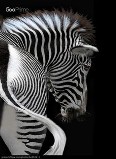 african stripes - stock photo