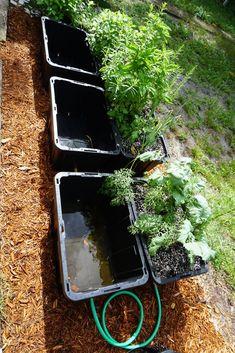 Self-watering Tote Garden: 3 Steps Hydroponic Gardening, Hydroponics, Organic Gardening, Container Gardening, Urban Gardening, Indoor Gardening, Self Watering Containers, Self Watering Pots, Succulent Terrarium