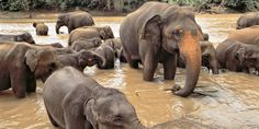 LOVE elephants, so beautiful.