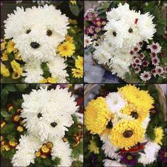 Imagina que lindo fazer uma decoração cheia desses puppys bouquet.