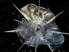 Deborah Bay shows the destruction wrought by bullets being blasted through plexi-glass.