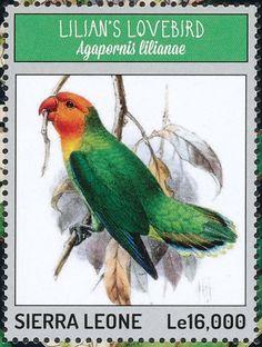Sierra Leona 2014-El Inseparable del Nyasa o Inseparable de Lilian es una especie de ave psitaciforme de la familia Psittaculidae nativa de África oriental.