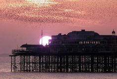 Starlings at sunset - West Pier, Brighton Brighton Sussex, Brighton And Hove, East Sussex, Images Of England, River Severn, Sunset West, Starling, Abandoned Buildings, Landscape Photos