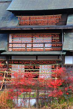 Drying persimmons, Yamanashi Prefecture, Enzan City, Japan