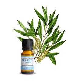 Découvrez comment se débarrasser des vers intestinaux avec des huiles essentielles en cliquant ici. Plants, Blog, Tips And Tricks, Massage Oil, Natural Remedies, Flora, Blogging, Plant, Planets