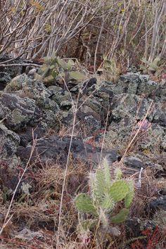 Paisaje de la REPSA con nopales, roca y palo locos