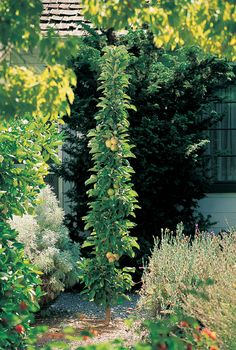 In a tiny spot | On a driveway, atop a doghouse, up a wall—here's how to garden in small and unusual spaces