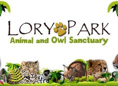 low key zoo where you really get up close and personal with awesome animals Lory Park, Owl Sanctuary, Low Key, South Africa, Places To Visit, Place Card Holders, Awesome, Animals, Animales