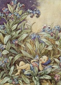 Dessins Fleurs du Jardin de Cicely Mary Barker