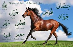 Discover the beauty of Arabic language