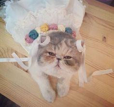 Princess dress, look good?