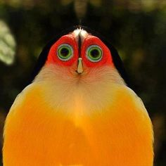Well that's an interesting looking bird......