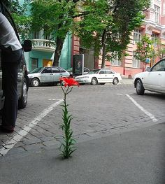 "Perseverance.  Google definition--""steady persistence in a course of action, a purpose, a state, etc, especially in spite of difficulties, obstacles, or discouragement.""  Text example: ""He sensed her withdrawing from him into her own world of disgruntlement, her lips drawn together in that look of exasperated perseverance she's gotten from her mother."" (Page 10)  My Sentence-- The flower's perseverance resulted in it growing through the concrete obstacle."