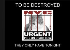 Tonight's list has been posted and there are 16 cats/kittens at risk. Please share. - - Info  Please Share:   Please start sharing now! Please Share: -  Click for info & Current Status: http://nyccats.urgentpodr.org/to-be-destroyed/
