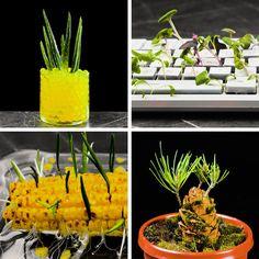 Useful plant hacks to grow your own garden Succulents Garden, Garden Plants, Hydrangea Care, Chinese Garden, Vegetable Garden Design, Vegetable Gardening, Planting Vegetables, Plantation, Growing Plants