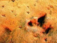 Lark Quarry Dinosaur Trackways, Winton, QLD Australia's Dinosaur Trail