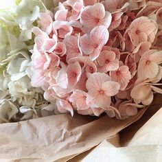 All Things Shabby and Beautiful Plum Pretty Sugar, Pretty In Pink, My Flower, Flower Power, Very Beautiful Flowers, Beautiful Things, Shabby Chic, Flower Quotes, Color Rosa