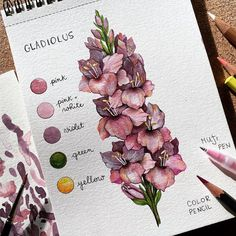 Art Drawings Sketches Simple, Easy Drawings, Watercolor Plants, Watercolor Art, Blending Colored Pencils, Colored Pencil Tutorial, The Joy Of Painting, Fashion Design Drawings, Easy Paintings