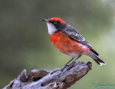 """Wren"" by WAeagle | Colorful Birds #Photography Contest Winners - ViewBug.com"