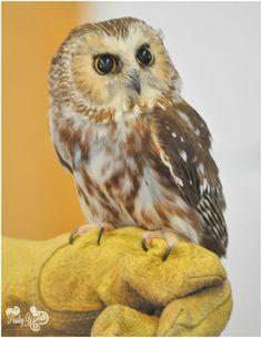 my photography #owl #paisleywimages taken 3-30-14
