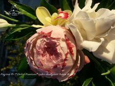 Peonia e gardenia di zucchero...