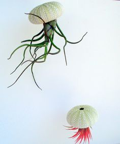 Hanging Sea Urchin Planter Set of Two Kit by TwistedAcres on Etsy, $13.00