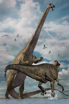 Diplodocus fighting off a T-Rex. Dinosaur Photo, Dinosaur Images, Dinosaur Pictures, Dinosaur Fossils, Dinosaur Art, The Good Dinosaur, Dinosaur Drawing, Prehistoric World, Prehistoric Creatures
